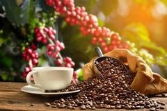 Top 10 loại cà phê ngon nhất thế giới